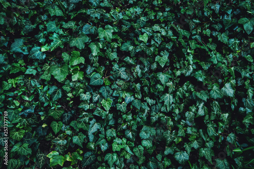 Green plant leaves background, top view. Nature spring concept, dark toned