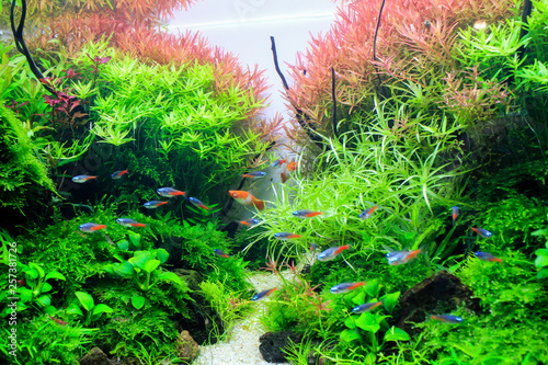 Canvas Planted aquarium with tropical fish