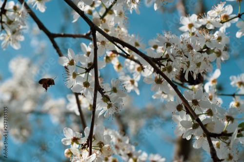 Obraz Die Natur erwacht - fototapety do salonu