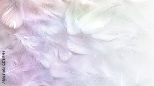 Angelic Pastel tinted White feather background - small fluffy white feathers ran Fototapet