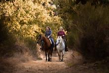 Ausritt Mit Zwei Pferden