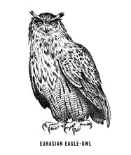 Eurasian Eagle Owl. Wild Forest Bird Of Prey. Hand Drawn Sketch Graphic Style.  Fashion Patch. Print For  T-shirt, Tattoo Or Badges.