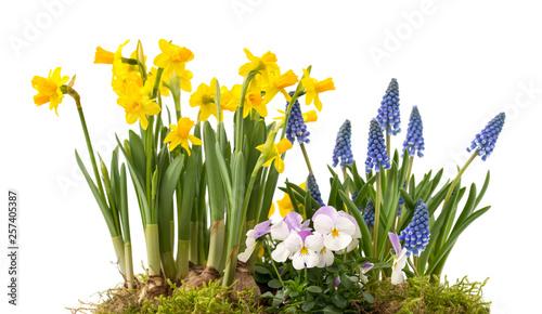 Poster de jardin Narcisse Frühlingsblumen