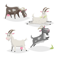 Cute Different Colors And Breeds Goats. Cartoon Flat Style Farm Animals Collection. Eating, Sleeping, Standing And Jumping Goats. Vector Illustration Isolated On White Background.