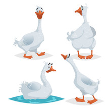 Cute Geese In Different Poses....