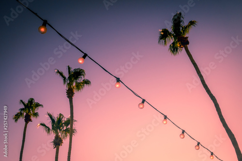 Poster Palmier Palm Trees and String Party Lights at Sunset Palm Springs Coachella Valley
