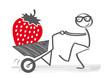 Gärtner mit Erdbeerernte