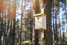 Wooden Bird House On The Pine Tree Trunk
