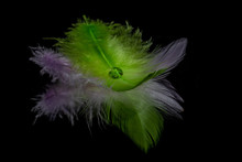 Purple And Green Feather With ...