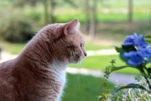 Orange Cat Sitting Near Blue Flowers