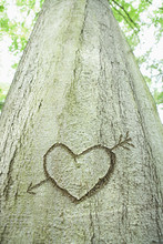 An Arrow And Heart Carved Into A Tree