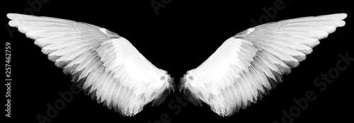 Fényképezés  white wings on a black