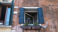 Cute Cat Sitting In The Open Window. Venice. Early Morning. Italian Streets.
