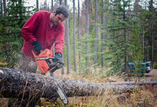 A Man Chops Wood In The Forest.