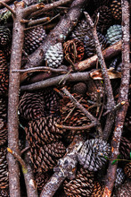 Close Up Of Pine Cones And Sticks.