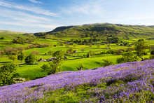 Bluebells Growing On A Limestone Hill, Yorkshire Dales National Park, England, UK
