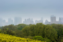 New York City Skyline With Central Park Trees In Foreground On A Rainy Day.