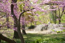 Central Park, New York City, I...