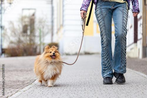 Obraz na plátně  A woman leads her dog on a leash