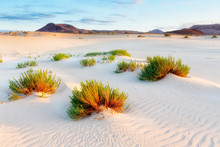 Sand Dunes With Plants And Mountains In Distance