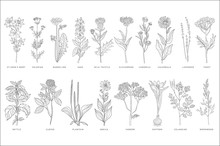 Various Medicinal Plants And F...