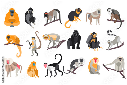 Fotografía Collection of different breeds of monkeys vector Illustrations on a white backgr