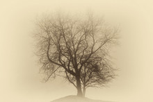 Single Leafless Tree In A Deep Fog On A Hill ( Vintage Sepia Effect).