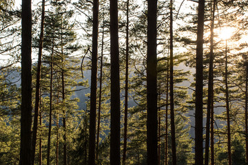 beautiful forest in the morning light