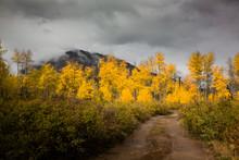 Marcellina Mountain In Autumn,...