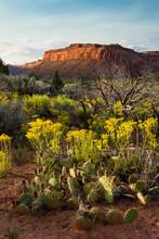 Sunset On Comb Ridge In The Spring, Utah, USA