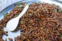 Cooked Bamboo Worms On Plate As Gourmet