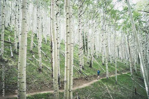 Rear view of man jogging in aspen tree forest - 257513592
