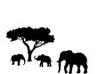 Elephant and two elephant calf mammal black silhouette animal. Vector Illustrator