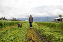 Teenage Girl Walking Two Dogs In Freshly Cut Field, Chilliwack, British Columbia, Canada