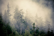 Landscape Of Forest In Fog.