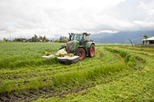 Farmer Mowing Grass With Tractor, Chilliwack, British Columbia, Canada