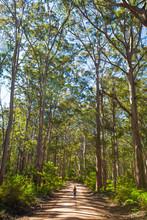Boranup Forest, Leeuwin Naturaliste National Park, Australia