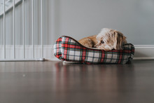 Little Dog In A Red And White Bed