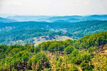 Pine Forests In Central Highlands Near Da Lat, Vietnam