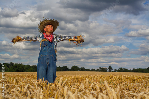 Stampa su Tela Caucasian man dressed as a scarecrow in a wheatfield