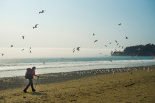 Backpacker Hiking Along Beach With Flock Of Seagulls Flying By, West Coast Trail, British Columbia, Canada