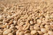 Large White Coffee Beans Dry I...