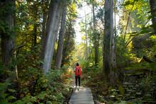 Hiker Crossing Forest Boardwalk, Maribel, Wisconsin, USA