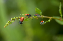 Red Bug Perch In A Plant In Ar...