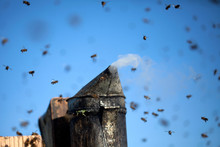 A Bee Smoker On Top Of A Beehi...