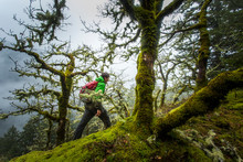 RUCKEL RIDGE, OREGON. A Man Hiking Alone In The Woods Walks Along A Mossy Ridge Covered Gnarled Trees On A Foggy, Misty Afternoon.