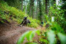 Person Cycling With Dog In Green Forest