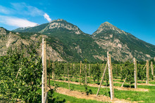 Landscape With Vineyard And Mountain, Martigny, Valais, Switzerland