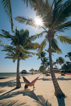 A Young Woman Lies Back In A Hammock Between Palm Trees On The Beach