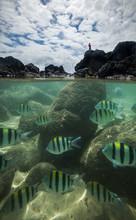 Fish Swimming Underwater, Kauai, Hawaii Islands, USA